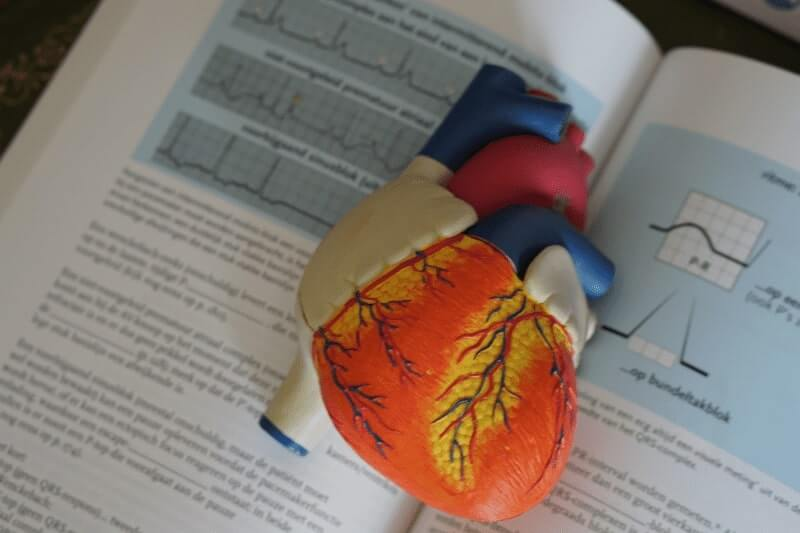 Heart Mock-up on a scholar text book