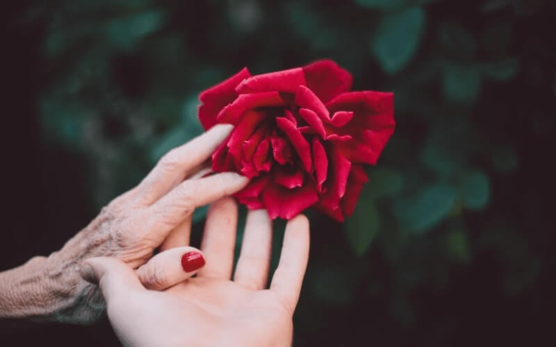 Rose held by older and younger generation